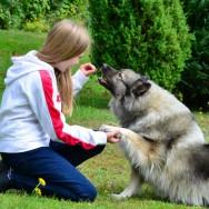 Choisir d'adopter un chien pour votre enfant