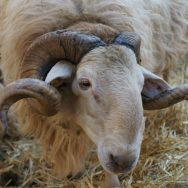 Pourquoi faire un séjour à la ferme avec vos enfants ?